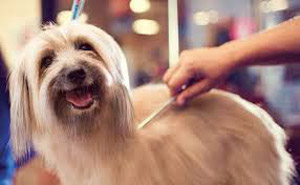 Grooming business for sale or lease absentee run pet grooming business both in store and mobile units self service pet wash pet sitting etc family owned and operated for 10 years solutioingenieria Images
