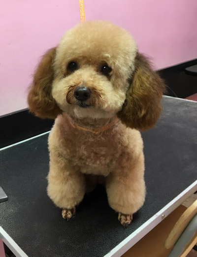 Grooming business for sale or lease established dog grooming business in torrance ca with steady recurring clientele is seeking for a new owner with grooming experience to operate the solutioingenieria Image collections
