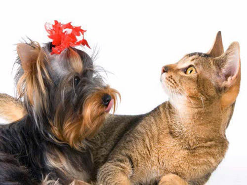 Dog Grooming Business For Sale In California
