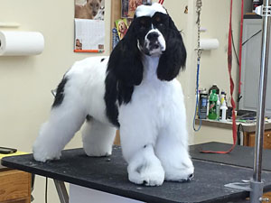 Pet grooming classified ads for dog and pet groomers and career seekers pet groomer wanted livonia solutioingenieria Gallery