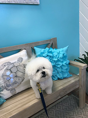 Pet grooming classified ads for dog and pet groomers and career seekers experienced dog groomer wanted for fun friendly team vero beach solutioingenieria Gallery