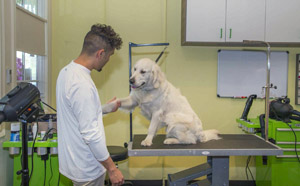 Pet grooming classified ads for dog and pet groomers and career seekers at 3030 pico blvd santa monica ca paws and effect pet spa is a high end pet spa in santa monica ca this job 3 4 daysweek is in a fantastic environment solutioingenieria Gallery