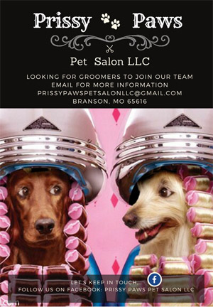 Pet Grooming Classified Ads For Dog And Pet Groomers And Career Seekers